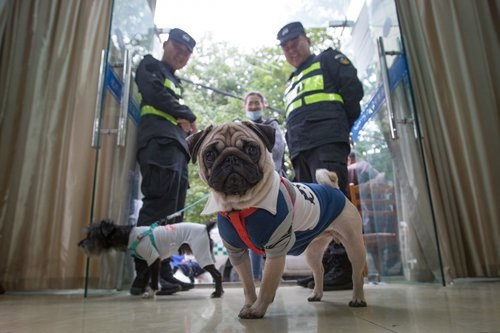 Dog owners queue up with their dogs at an office in Xiacheng District of Hangzhou